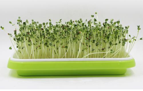 豆芽的质量安全检测报告