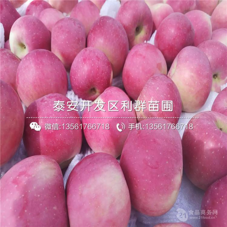 水蜜桃蘋果苗、水蜜桃蘋果苗價格