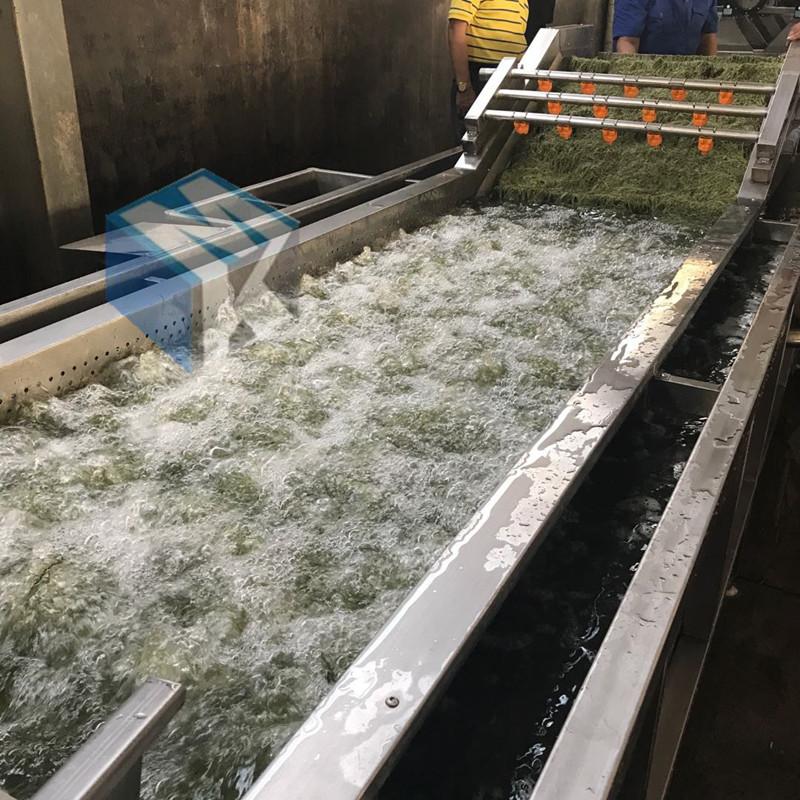 热销专业海藻清洗机 裙带菜脱盐清洗设备 海产品清洗机质量保证