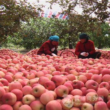 遂宁红富士苹果批发多钱一斤红富士苹果批发价格