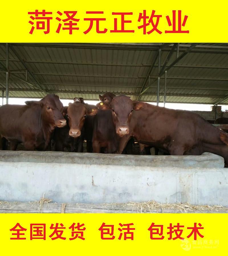 乌海养肉牛投资多少