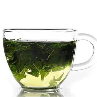 精选新鲜富硒桑叶茶厂家价格