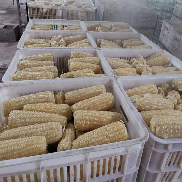 专用速冻粘玉米杀青设备 全自动冷冻玉米棒加工流水线 蒸煮玉米机
