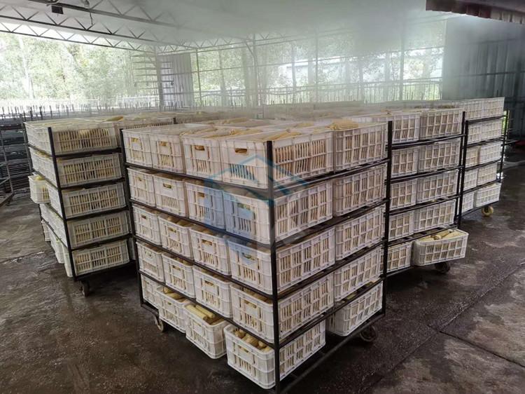 供应全自动速冻玉米加工设备 粘玉米棒专用蒸汽蒸煮机