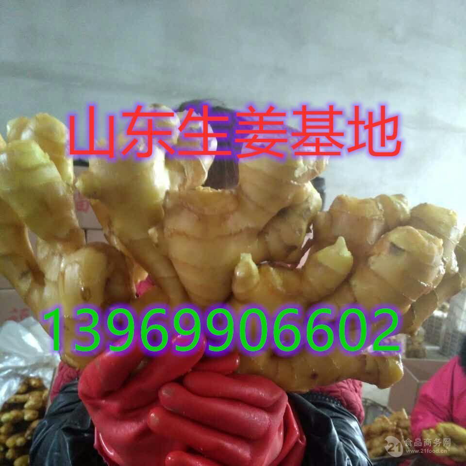 山东生姜 姜种大量供应产地直销