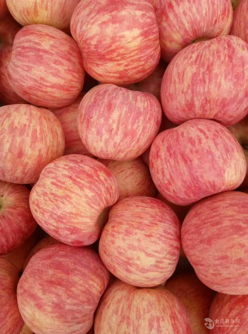 河北洛川苹果批发价格