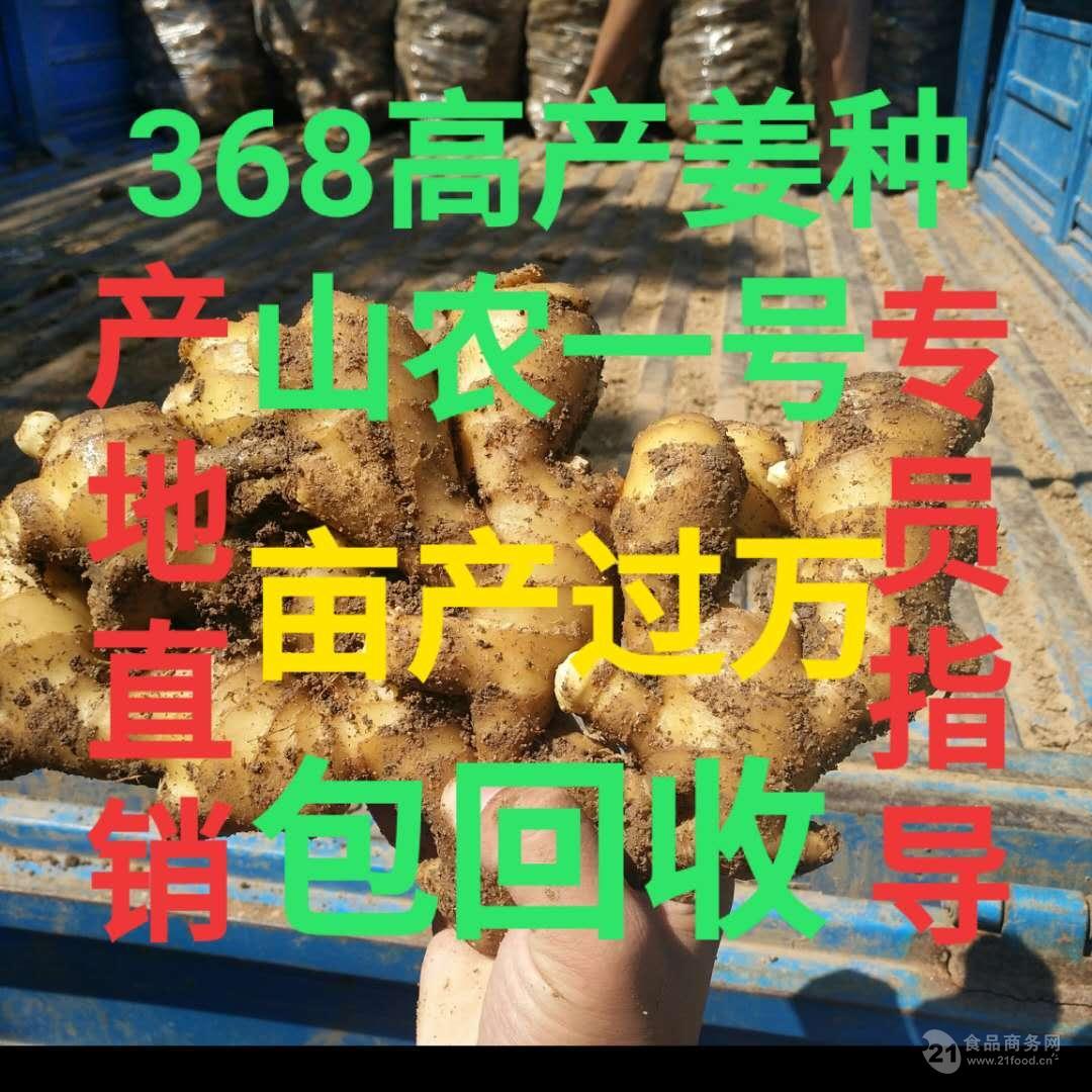 辽宁南方生姜种植技术