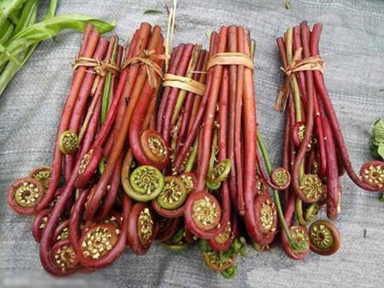 速冻山野菜深加工设备 蕨菜清洗蒸煮漂烫护色杀青流水线生产厂家