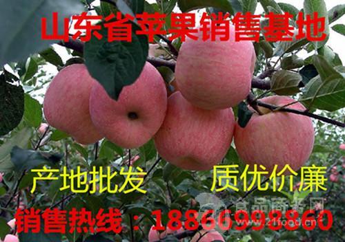 益阳今日红富士苹果批发价格 益阳水果批发市场