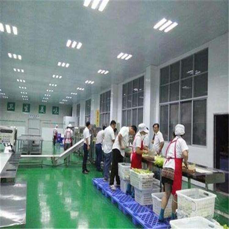 黔南全自动蘑菇清洗机厂家直销