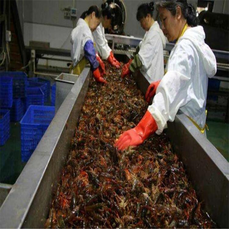 大家都在用的龙虾生产设备生产厂家