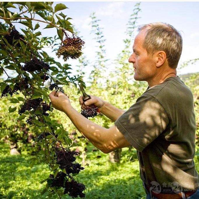 接骨木莓濃縮果汁3.2%