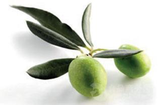 橄榄果粉生产厂家