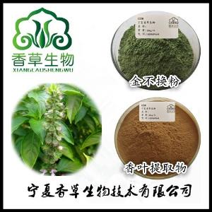 金不换提取物生产商 罗勒籽粉160目 九层卷浓缩液批发价格