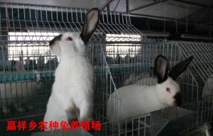 山西肉兔养殖基地