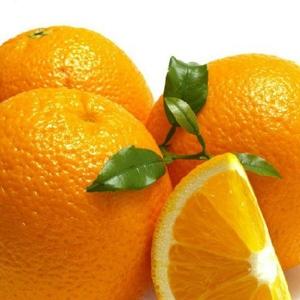 彝山香批發云南特產XL號褚橙勵志橙65-70mm冰糖橙原產地直供
