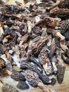 云南野生羊肚菌價格,云南野生羊肚菌,野生羊肚菌批發代發