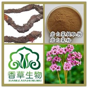 岩白菜提取物价格 香草生物供应岩白菜粉 岩白菜素7%  专业生产
