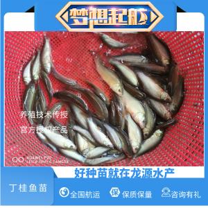 养殖新宠丁歲鱼2020年丁歲鱼引种指南-丁歲鱼全自动化养殖