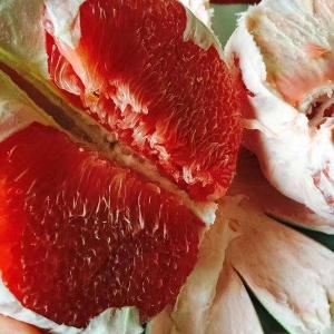 红宝石青柚苗--漳州市永达果苗有限公司