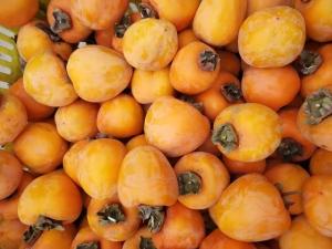 柿子 柿子餅柿子批發價格