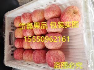 山东冷库红富士苹果供应