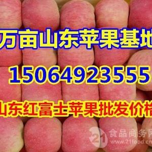 今日红富士苹果产地格,山东苹果产地价格