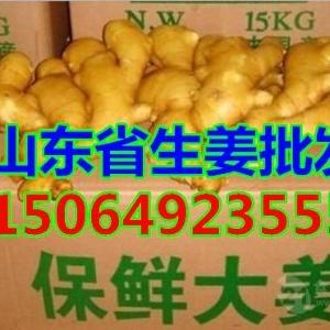 山東省優質生姜大姜產地,今天大姜產地價格