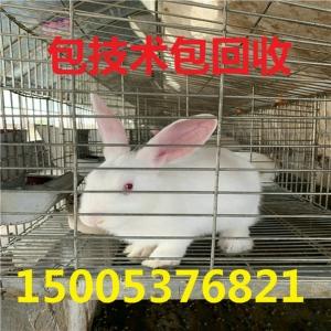 山西省的兔子養殖企業