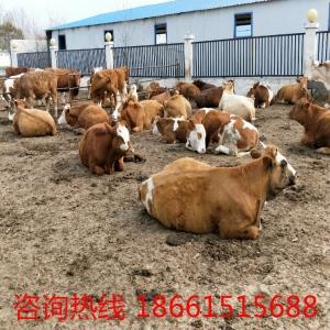 种牛犊价位