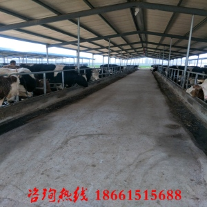 养牛犊核心技术