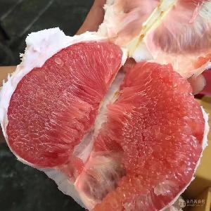 福建買泰國紅寶石青柚苗/暹羅紅寶石青柚苗報價