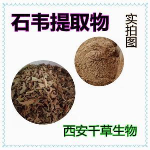石苇提取物 石苇水溶浓缩粉 生产石苇提取物石苇浸膏粉