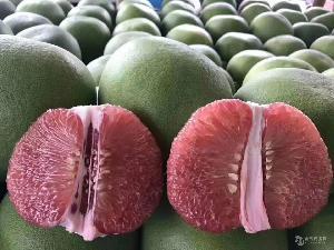 泰国红宝石青柚苗(1年苗三梢成熟)泰国红宝石柚子苗