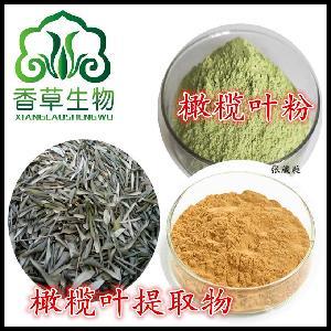 橄榄叶粉 精细粉80-120目 橄榄叶全粉 宁夏厂家直销