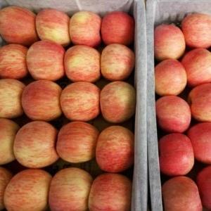 今日红富士苹果价格详情 山东省今日红富士苹果批发价格