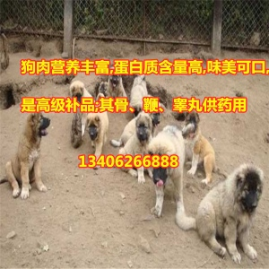 食用狗养殖