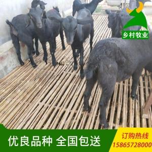 山东肉驴养殖场 活肉驴养殖场 纯种肉驴 肉驴崽 小驴价格