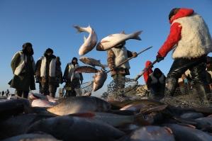 北京查干湖魚銷售
