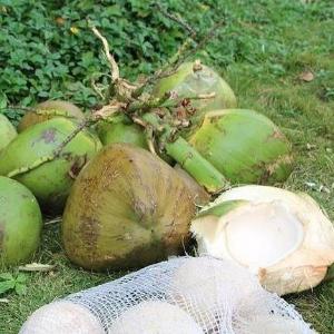 海南椰子口感清甜产地直供价格