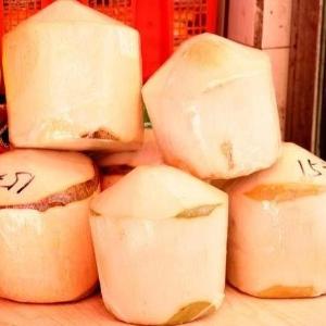 供应新鲜椰皇海南出售多汁椰子