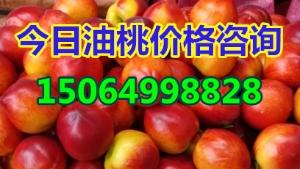 油桃产地格,山东大棚油桃价格