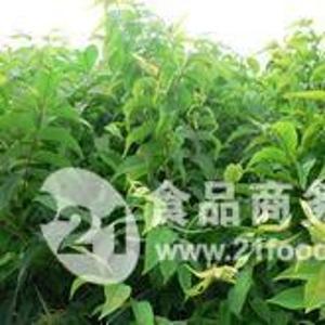 一年花椒苗+二年花椒苗=大红袍花椒苗
