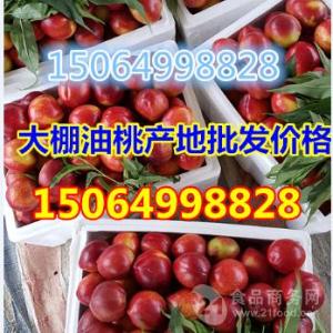 中国油桃主要产地
