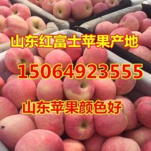 一級條紋紅富士蘋果產地價格,今年山東紅富士蘋果價格