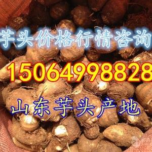 山東省芋頭產地的價格