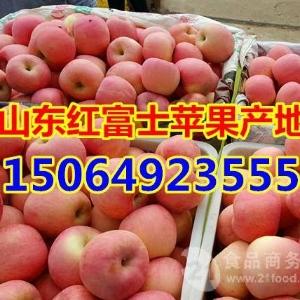 山东红富士苹果产地价格详情、山东苹果价格详情