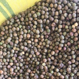 供應豌豆 麻豌豆 原料豌豆干豌豆 酒廠專用 芽苗菜專用豆