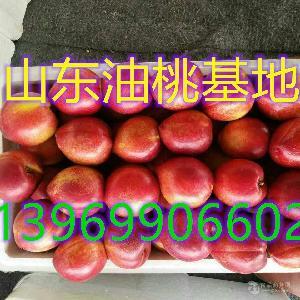 山东优质油桃大量供应中山东油桃价格