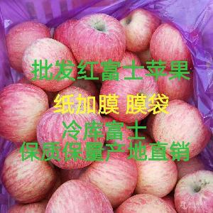 红富士苹果批发 山东苹果